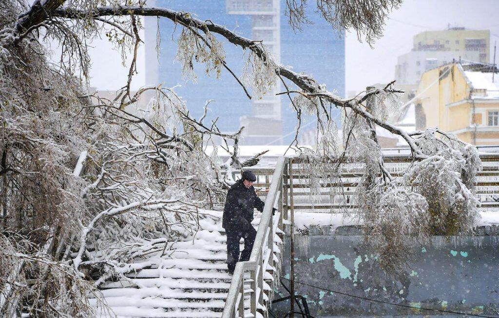 Árboles congelados por las lluvias engelantes de Vladivostok.
